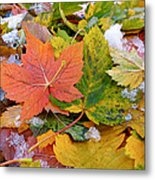 Seasonal Mix Metal Print by Rona Black