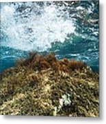 Seaweed Metal Print by Science Photo Library