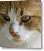 Serious Gato 3 Metal Print by Julie Palencia
