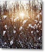 Setting Sun In Winter Forest Metal Print by Elena Elisseeva