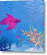 Several Red Betta Fish Swimming Metal Print by Elena Duvernay