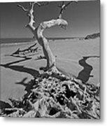Shadows At Driftwood Beach Metal Print by Debra and Dave Vanderlaan
