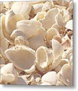 She Sells Seashells Metal Print by Kim Hojnacki