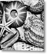 Shellscape In Monochrome Metal Print by Kaye Menner