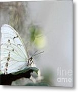 Silent Beauty Metal Print by Sabrina L Ryan