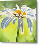 Single White Daisy Blossom Metal Print by Sharon Freeman