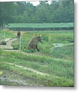 Six Flags Great Adventure - Animal Park - 121266 Metal Print by DC Photographer