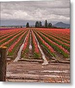 Skagit Valley Tulip Farmlands In Spring Storm Metal Print by Valerie Garner