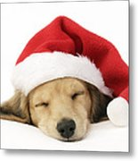 Sleeping Santa Puppy Metal Print by Greg Cuddiford