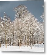 Snow Covered Trees In The Forest In Winter Metal Print by Matthias Hauser