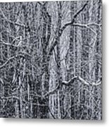 Snow In The Forest Metal Print by Diane Diederich