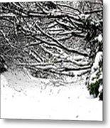 Snow Scene 5 Metal Print by Patrick J Murphy