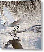 Snowy Egret Gliding Across The Water Metal Print by John Bailey