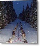 Snowy Night In The Pines Metal Print by Karen  Ramstead