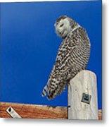 Snowy Owl Metal Print by Everet Regal