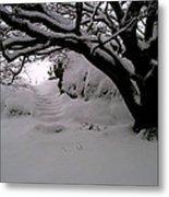 Snowy Path Metal Print by Amanda Moore