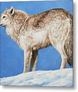 Snowy Wolf Metal Print by Crista Forest