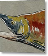 Sockeye Salmon Head Study Metal Print by Juan  Bosco