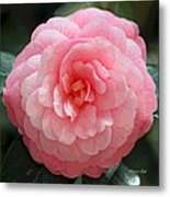Soft And Pink Metal Print by Suzanne Gaff