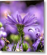Soft Lilac Metal Print by Leif Sohlman