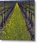 Sonoma Mustard Grass Metal Print by Garry Gay