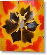 Soul Of A Tulip Metal Print by Sonali Gangane