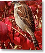 Sparrow Metal Print by Rona Black