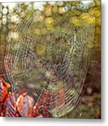 Spider Web Metal Print by Edward Fielding