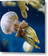 Spotted Jelly Fish 5d24955 Metal Print by Wingsdomain Art and Photography