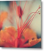Spread The Love Metal Print by Laurie Search