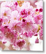 Spring Cherry Blossoms  Metal Print by Elena Elisseeva