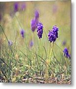 Spring Flowers Metal Print by Diana Kraleva
