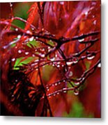 Spring Rain Metal Print by Rona Black