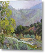 Spring Sycamore Metal Print by Sharon Weaver