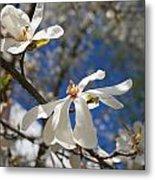 Spring Trees 1 Metal Print by Allan Morrison
