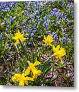 Spring Wildflowers Metal Print by Elena Elisseeva