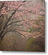 Spring Woods Metal Print by Patrick Downey
