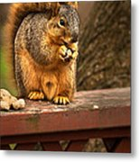 Squirrel Eating A Peanut Metal Print by  Onyonet  Photo Studios