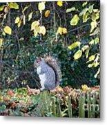 Squirrel Perched Metal Print by Matt Malloy