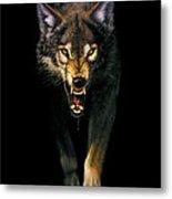 Stalking Wolf Metal Print by MGL Studio - Chris Hiett