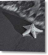 Starfish On The Beach Bw Metal Print by Susan Candelario