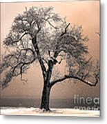 Stories To Tell Metal Print by Betty LaRue