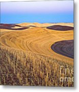 Stubble Metal Print by Don Hall