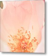 Study Of A Rose Four Metal Print by Lisa McStamp