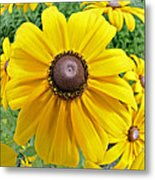 Summers Bloom Metal Print by Susan Leggett
