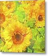 Sunflower 19 Metal Print by Pamela Cooper