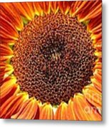 Sunflower Burst Metal Print by Kerri Mortenson
