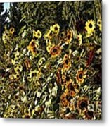 Sunflower Fields Forever Metal Print by Peggy Hughes
