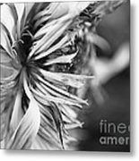 Sunflower Focus Metal Print by Terry Rowe
