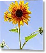 Sunflower In The Sky Metal Print by Kerri Mortenson